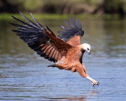 Pantanal_bird_gallery_I8U2969