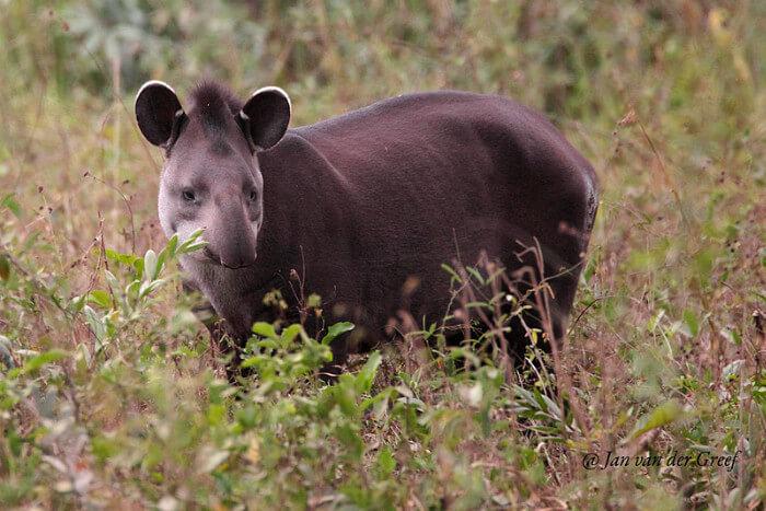 Pantanal wildlife tour - Pantanalsafaris com