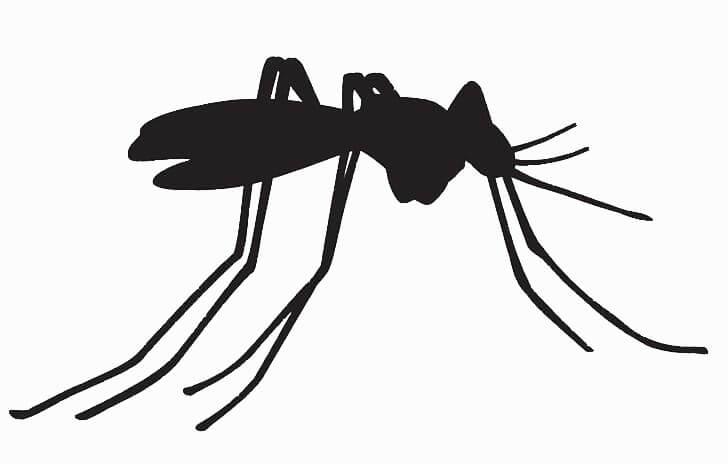 Mosquito Pantanal